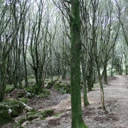 Il bosco di Linasia
