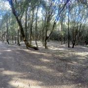 Dentro al bosco
