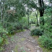Nuovamente nel bosco