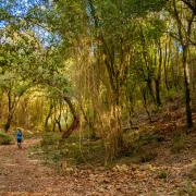 Foresta del Marganai